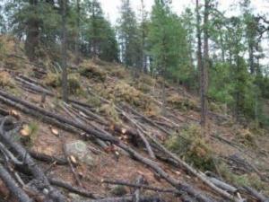 aprovechamiento-forestal-segovia