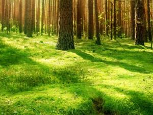 beneficios-biomasa-frente-petroleo