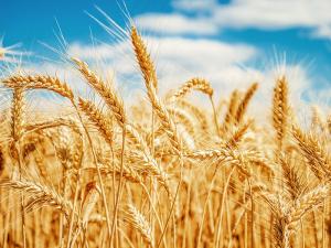 biomasa-agricola