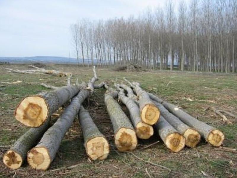 biomasa-ence