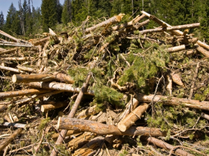 biomasa-forestal