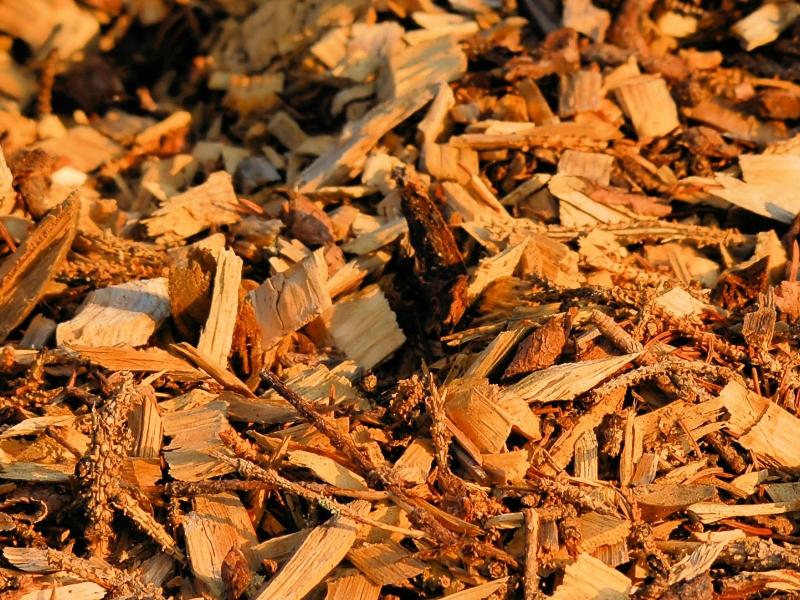 biomasa-valencia