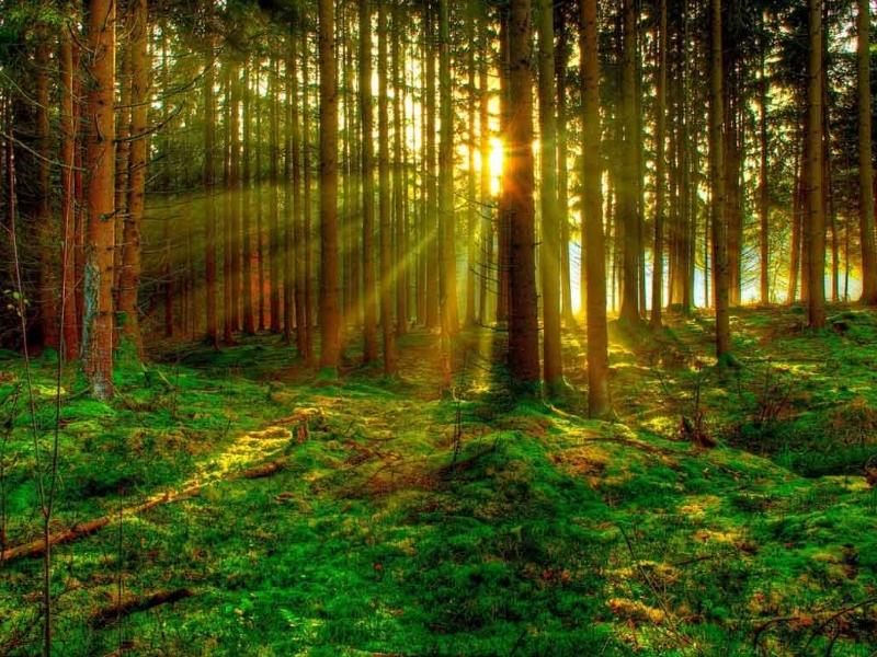 bosque-biomasa
