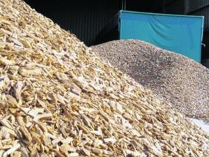 cultivos-forestales-biomasa