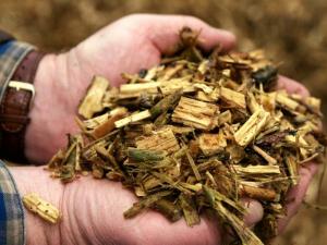 expertos-en-biomasa