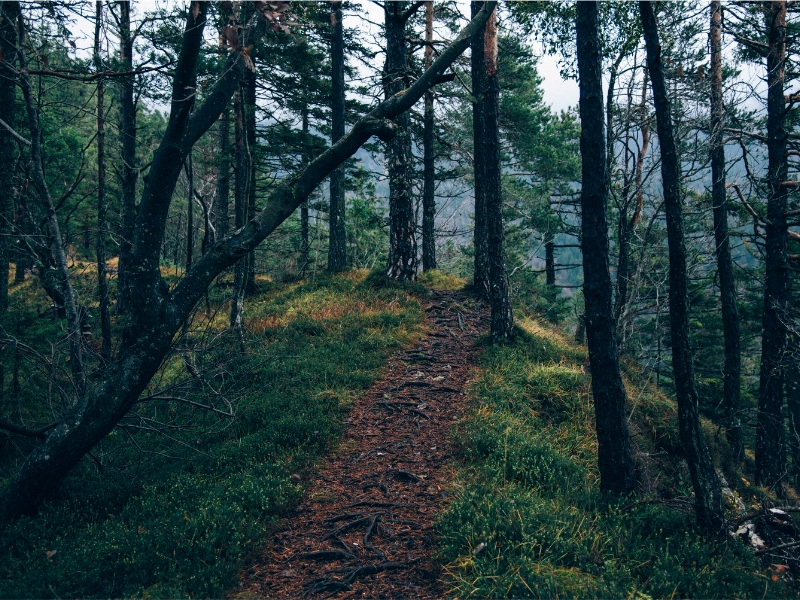 plan-forestal-gobierno