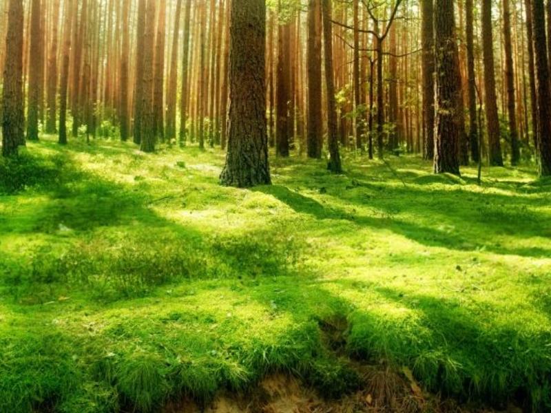 xunta-biomasa